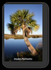 Inodes Palmetto