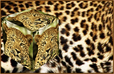 Leopard QSL