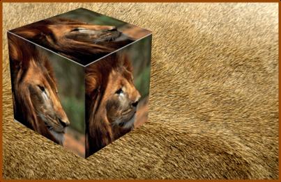 Lion QSL