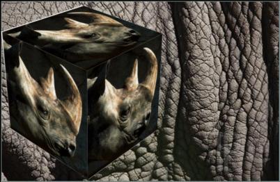 Rhino -QSL